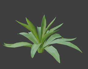 3D model game-ready agave