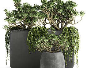 3D Crassula in a black flowerpots 811