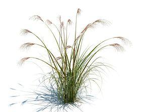 Green Tall Grass 3D model