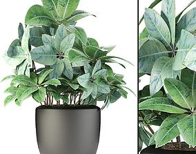 Plant in Pot Flowerpot Exotic Plant 3D pots