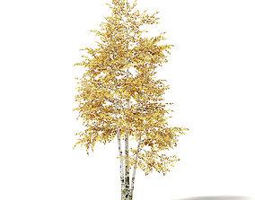 Silver Birch 3D Model 4m deciduous