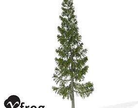 XfrogPlants Grand Fir 1 3D