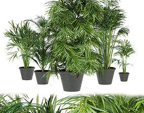 Collection plant vol 256 3D model