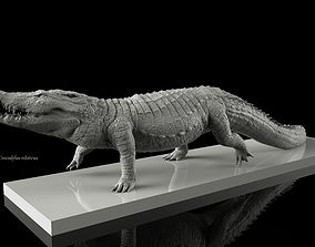 Crocodile 3D Models   CGTrader