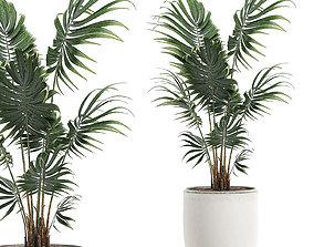 3D model Decorative palm in a white flowerpot 519