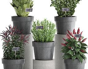 3D model Decorative plants for the kitchen 391