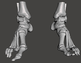 Left and Right feet - male 3D