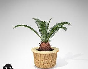 3D XfrogPlants Sago Palm