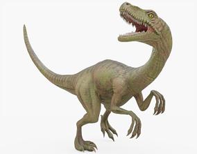 Velociraptor Rigged 3D asset
