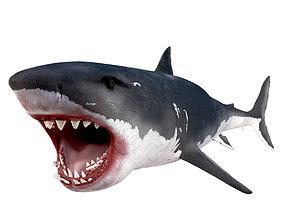 3D asset White Shark Rigged
