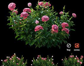 3D Plant rose set 01