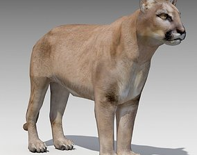 3D asset Cougar Animated