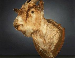 Goat Head Photorealistic 3D asset
