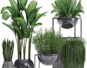 Collection Exotic plants 3D model banana