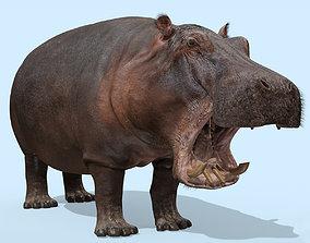 3D Super Hippo 8K - Animated