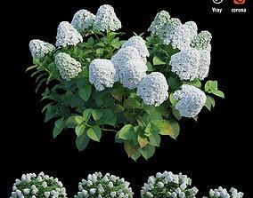Hydrangea Plant set 30 3D