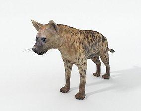 Hyena 3D asset low-poly