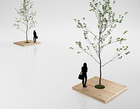 Minimalistic Young Tree on Wooden Base 3D model