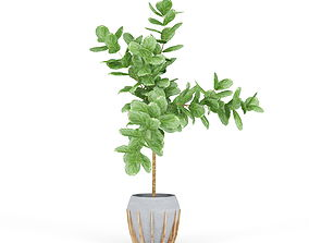 3D Ficus Lyrata