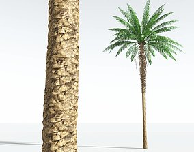 EVERYPlant African Oil Palm 01 --16 Models-- 3D