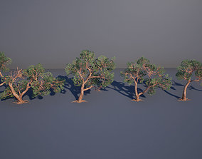 3D asset Juniper Tree
