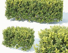 Buxus Sempervirens Nr5 hedge 50cm 3D model