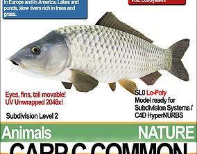 Carp C Common 3D