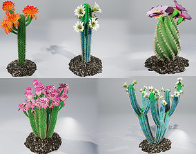 3D model Cactus collection