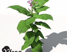3D model XfrogPlants Tobacco