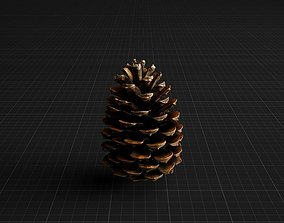 Highly Detailed Pine Cone 3D