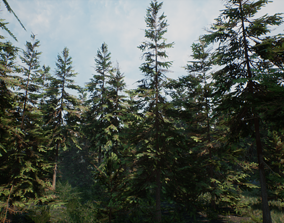 Realistic Spruce Trees 3D asset low-poly