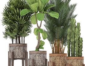 rapis Collection of Exotic plants 3D