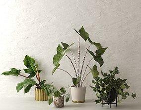 3D Pots with Plants 3