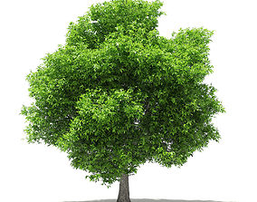 3D model Avocado Tree