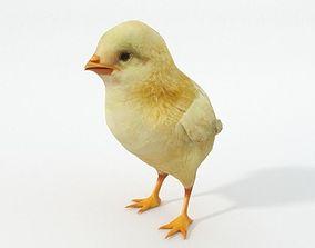 3D model game-ready Little Chicken