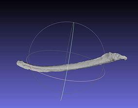 3D printable model Psittacosaurus Left Dorsal Rib 2