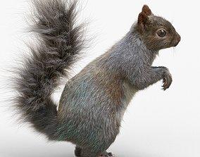 3D model Squirrel rig