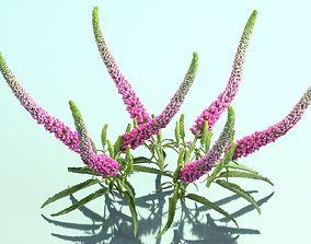 3D model Summer Lilac Buddleja Davidii Butterfly Bush