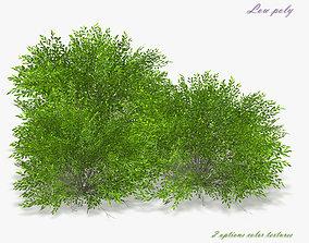 3D asset Bush Willow Salix purpurea Nana