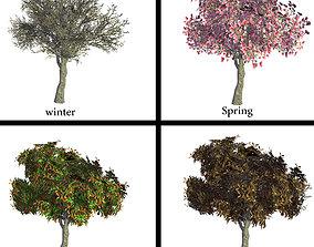 magnolia tree 3D asset