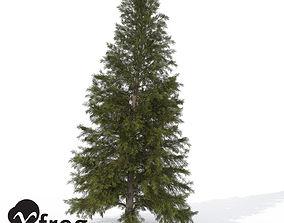 XfrogPlants Eastern Hemlock 3D