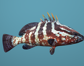 3D asset Nassau Grouper