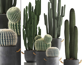 Collection of Exotic Cactus Plants 411 3D model
