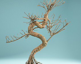 3D model RAW SCAN Dead Bonsai Tree High Poly 08
