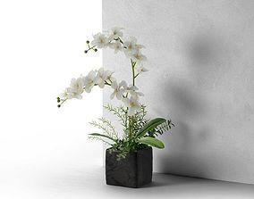 3D Orchid in Cube Pot