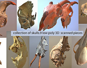 9 low poly scanned animal skulls 3D asset game-ready