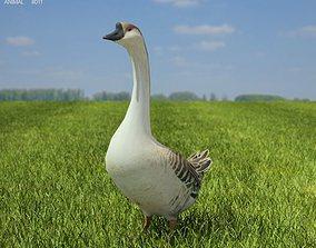 Chinese Goose Anser cygnoides 3D asset