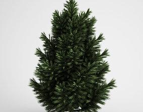 CGAxis European Black Pine 23 3D model