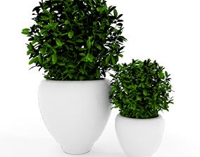 Plants modern 3d 3D model
