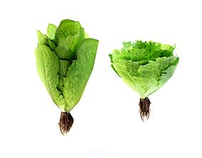 3D asset 2 Low Poly Lettuce